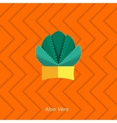 flat of indoor homeplant aloe vector image