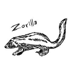zorilla - sketch hand drawn with vector image