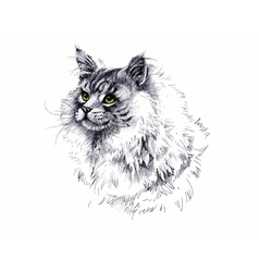 black and white longhair cat ink hand drawn vector image vector image