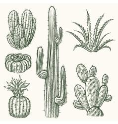 Hand drawn cactus vector