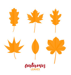 autumn leaves collection of fall leaves in trendy vector image