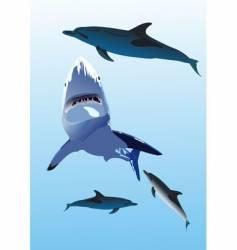 Dolphins and a shark vector