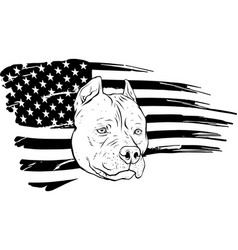 Draw in black and white head pitbull vector