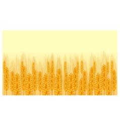 Ear wheat vector