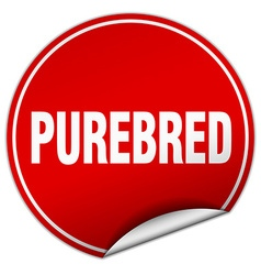 Purebred round red sticker isolated on white vector