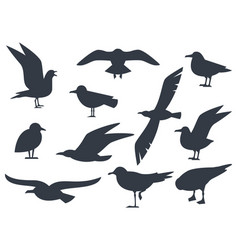 seagull silhouette set isolated on white vector image