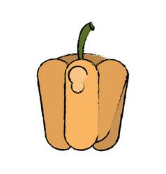 drawing pepper vegetable diet nutrition vector image