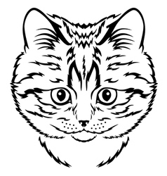 cat kitten vector image