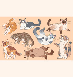 Cute cats funny different breeds kittens pets vector
