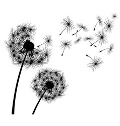 Dandelion flower vector