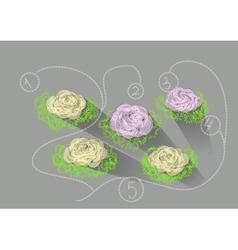 kale garden vector image