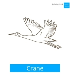 Crane bird learn birds coloring book vector image