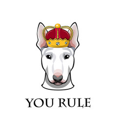 English bull terrier dog head in crown you rule vector