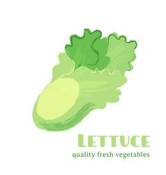 Fresh lettuce isolated on white background vector