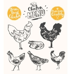 Meat menu scheme chicken cuts drawn vector