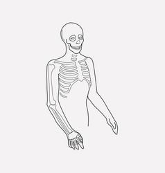 skeleton icon line element of vector image