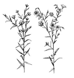 hand drawn flax flowers and seeds vector image vector image