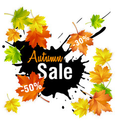 autumn sale fall sale design with autumn leaves vector image