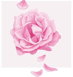 Delicate pink rose with falling petals vector