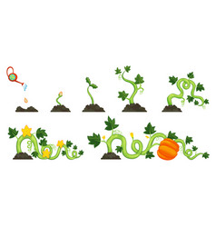 Life cycle growth pumpkin plant on white vector