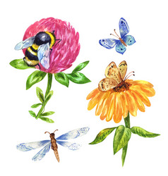 Watercolor bumblebee dragonfly butterfly vector