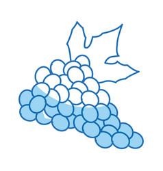 grape bunch fruit leaf food design vector image