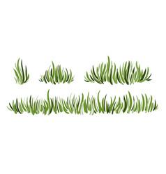 hand drawn green grass set vector image