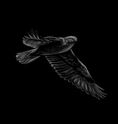 portrait a flying falcon on a black background vector image