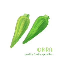 fresh okra isolated on white background vector image vector image