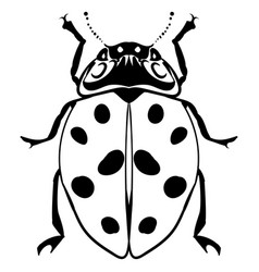 hand drawn ink sketch ladybug isolated vector image