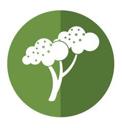 Broccoli vegetable diet nutrition shadow vector