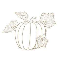 pumpkin outline doodle vector image