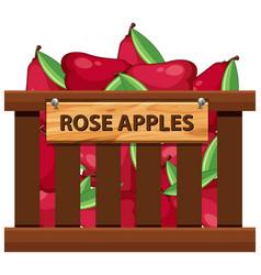 Rose apple in wooden crate vector