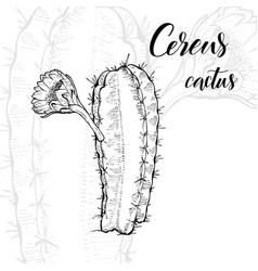 hand drawn cereus cactus vector image