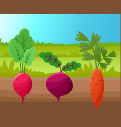 Carrot radish and beetroot vector