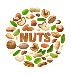 cartoon nuts round concept vector image