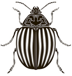 colorado potato beetle isolated on white vector image