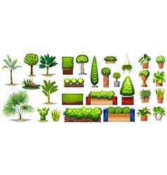 Different species of plants vector
