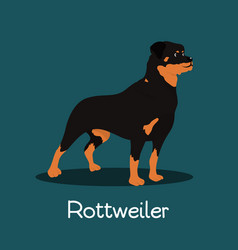 Fierce rottweiler dog cartoon design vector