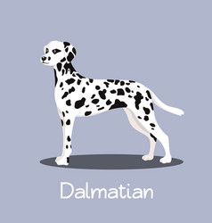 an depicting a cute dalmatian dog cartoon vector image