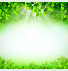 branch with fresh green leaves vector image