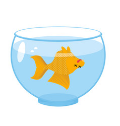 dead gold fish in aquarium sea animal deceased vector image