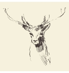 Deer engraving hand drawn sketch vector image