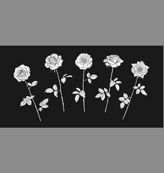 five rose flowers in engraving style with leaves vector image