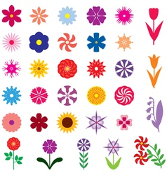 flower color vector image