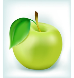 Fresh green apple vector