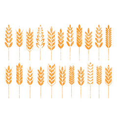 Grain cereal icon shape grunge vector