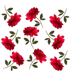 Holiday pattern with red beautiful roses vector
