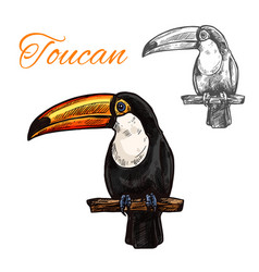 Toucan isolated sketch of tropical exotic bird vector