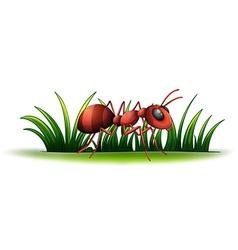 An ant vector